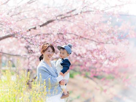毎年違う桜