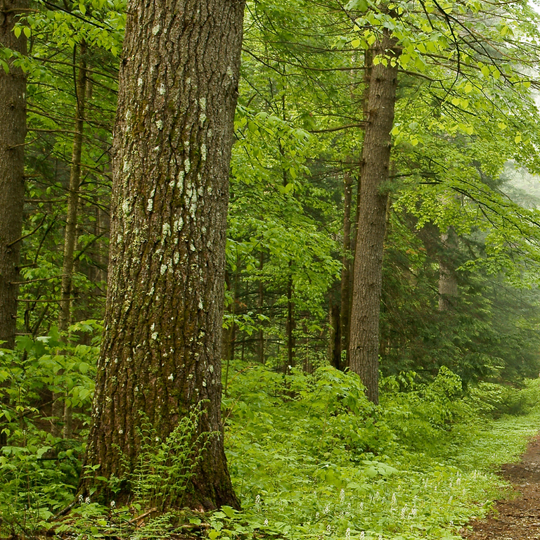 The Spiritual Wisdom of Trees: Online Discussion