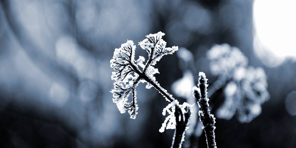 Winter Spirituality: Vulnerability & Revelation