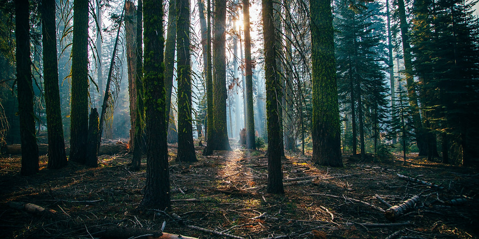 Deep Slowing: Forest Bathing Backpacking Trip