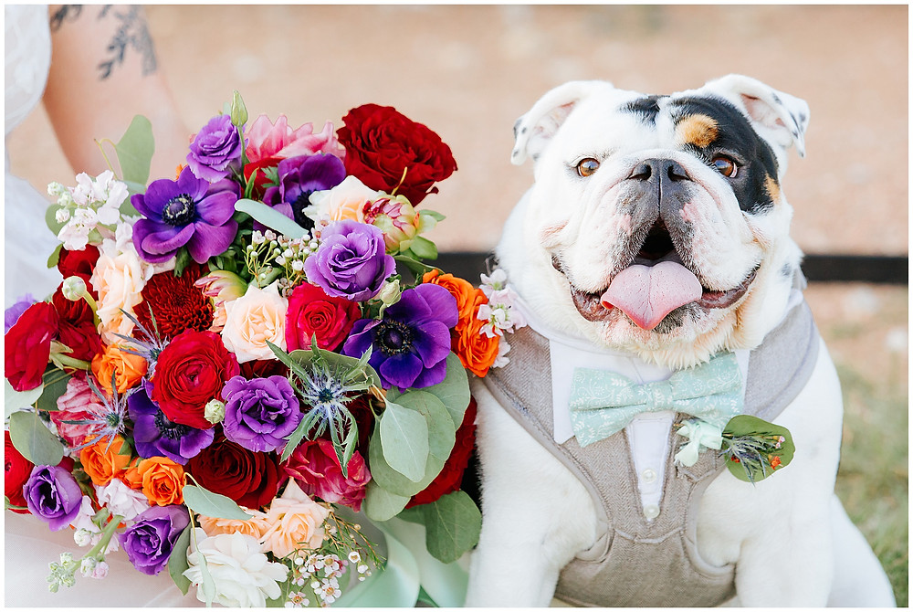 Wedding at The Allen Farmhaus - Snap Chic Photography - San Antonio, New Braunfels and Boerne Wedding Photographer, Dog Bowtie, Bulldog