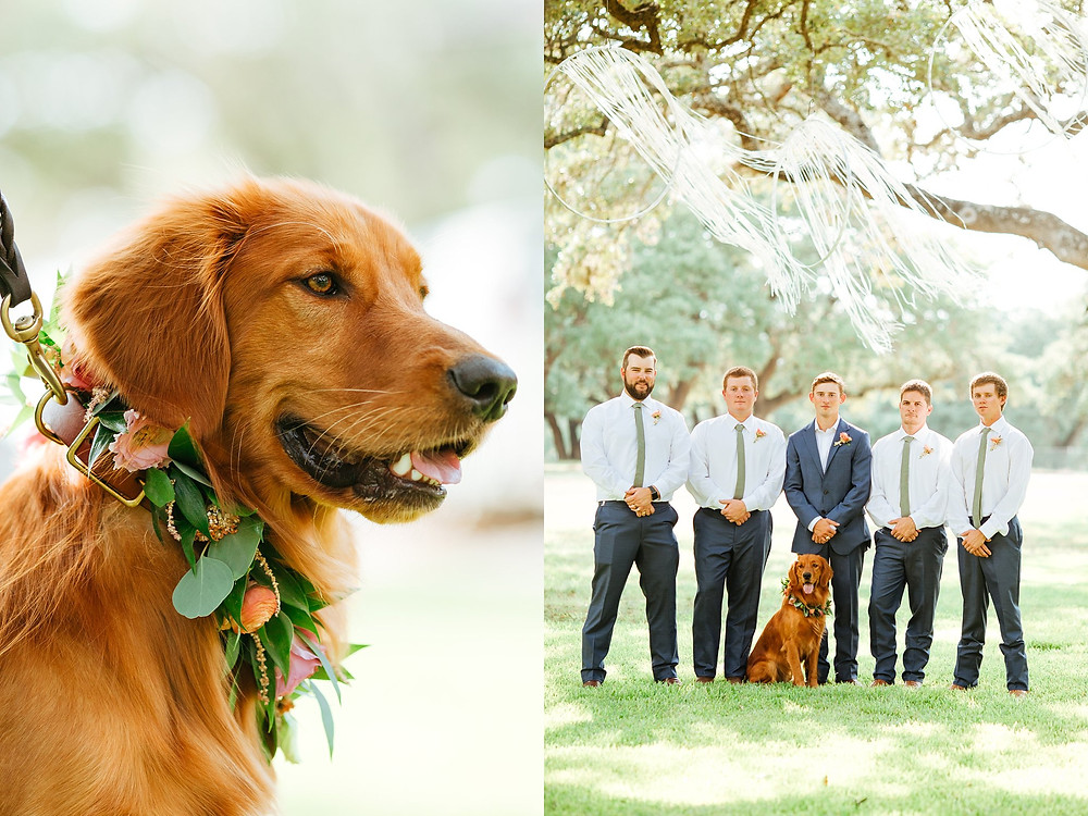 The Oaks at Boerne Wedding | Snap Chic Photography | Boerne and San Antonio Wedding Photographer | Dog Wedding Floral Collar