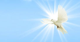 dove-sky-peace-dove-wing.jpg
