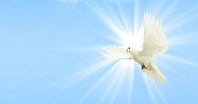 dove-sky-peace-dove-wing.jpg
