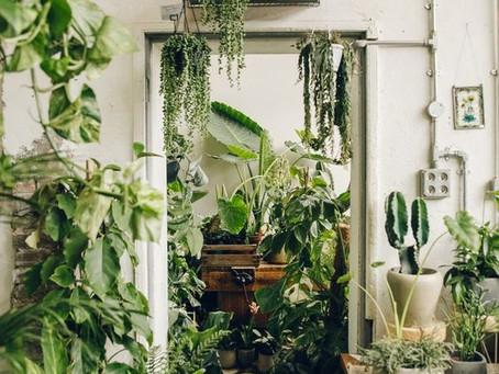Plantas: Propiedades Magicas