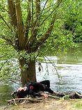 nature printemps_edited_edited.jpg