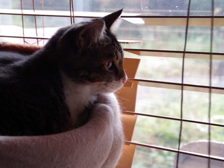 迷い猫を預かっています。