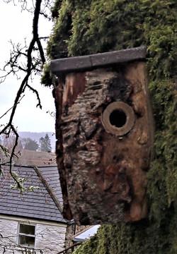 Mick's log nest