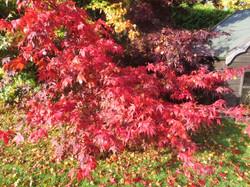 Elspeth garden no1