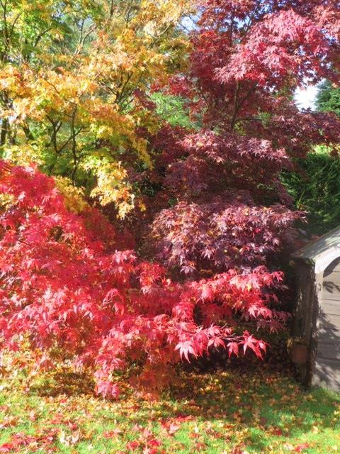 Elspeth garden no2