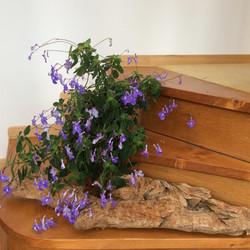 Margaret's Driftwood