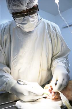 PanetaAnimalHospital24Procedimento-