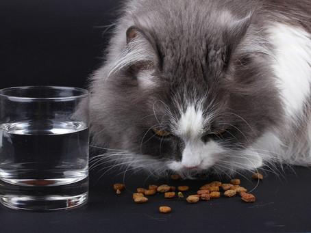 Makanan agar kucing menjadi lebih gemuk