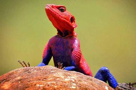 Reptil yang Mudah Dipelihara dan Persiapan Sebelum Merawatnya