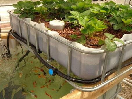 Sekilas Tentang Aquaponic, Manfaat Serta Komponen-Komponen Aquaponic Yang Sebaiknya Diketahui!