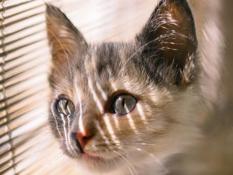 Ini Dia Tips Agar Kucing Tidak Bosan Yang Wajib Dicoba