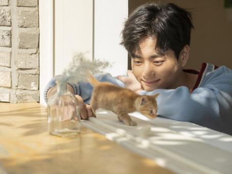 Komunikasi Dengan Kucing: Inilah Cara Kucing Berkomunikasi Dengan Majikannya!