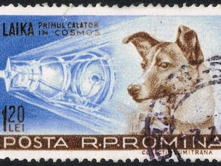 Fakta Mengejutkan Tentang Laika, Anjing Pertama Yang Mengelilingi Orbit Bumi