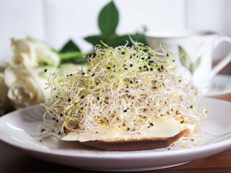 Ostsmörgås med alfalfagroddar och purjolöksgroddar