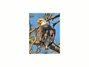 Eagle on the Eagle View Trail!