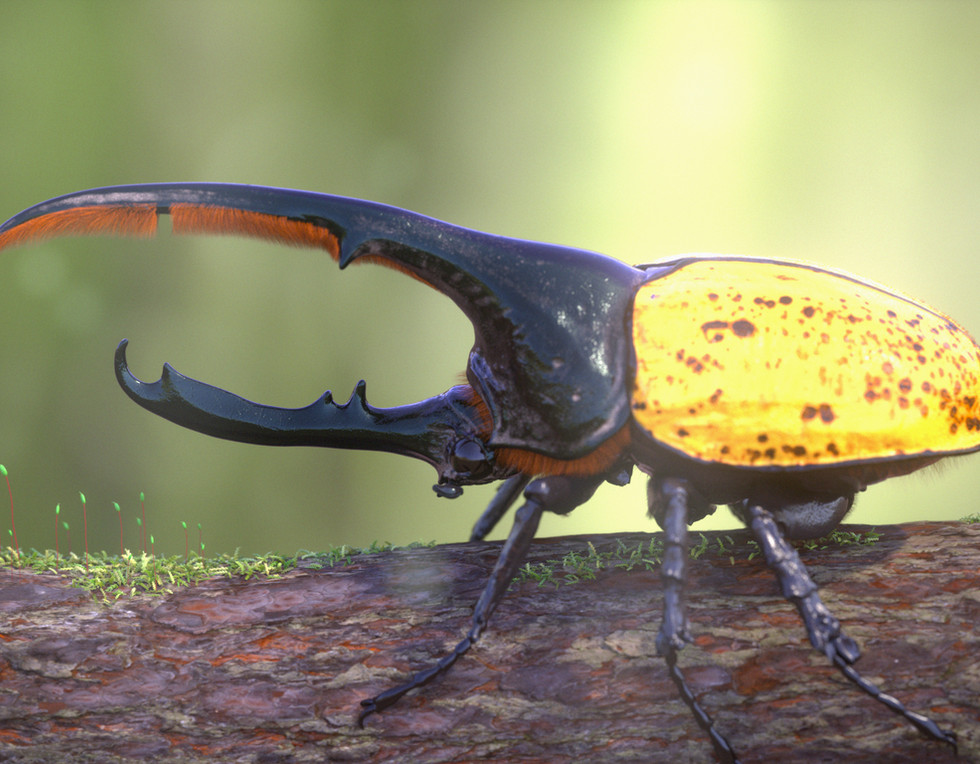 Beetle_.0164.jpg