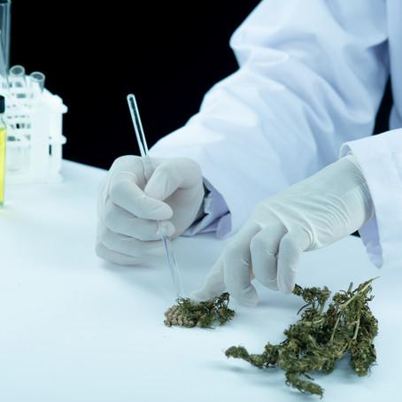 Dagli USA: Dove la Cannabis è legale meno morti per overdose