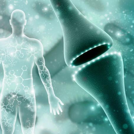 Il Sistema Endocannabinoide (ECS): «Il nostro angelo custode»