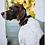 Thumbnail: Genuine Leather Dog Collar