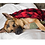 Thumbnail: Hunter's Plaid Dog Blanket