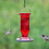 Thumbnail: Ruby Starburst Vintage Glass Bottle - Hummingbird Feeder