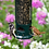 Thumbnail: Squirrel Buster Legacy Feeder