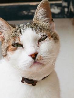 Es gibt so viele verletzte und kranke Katzen auf Mallorca