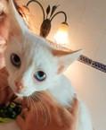 weisses Kitten sucht zu Hause