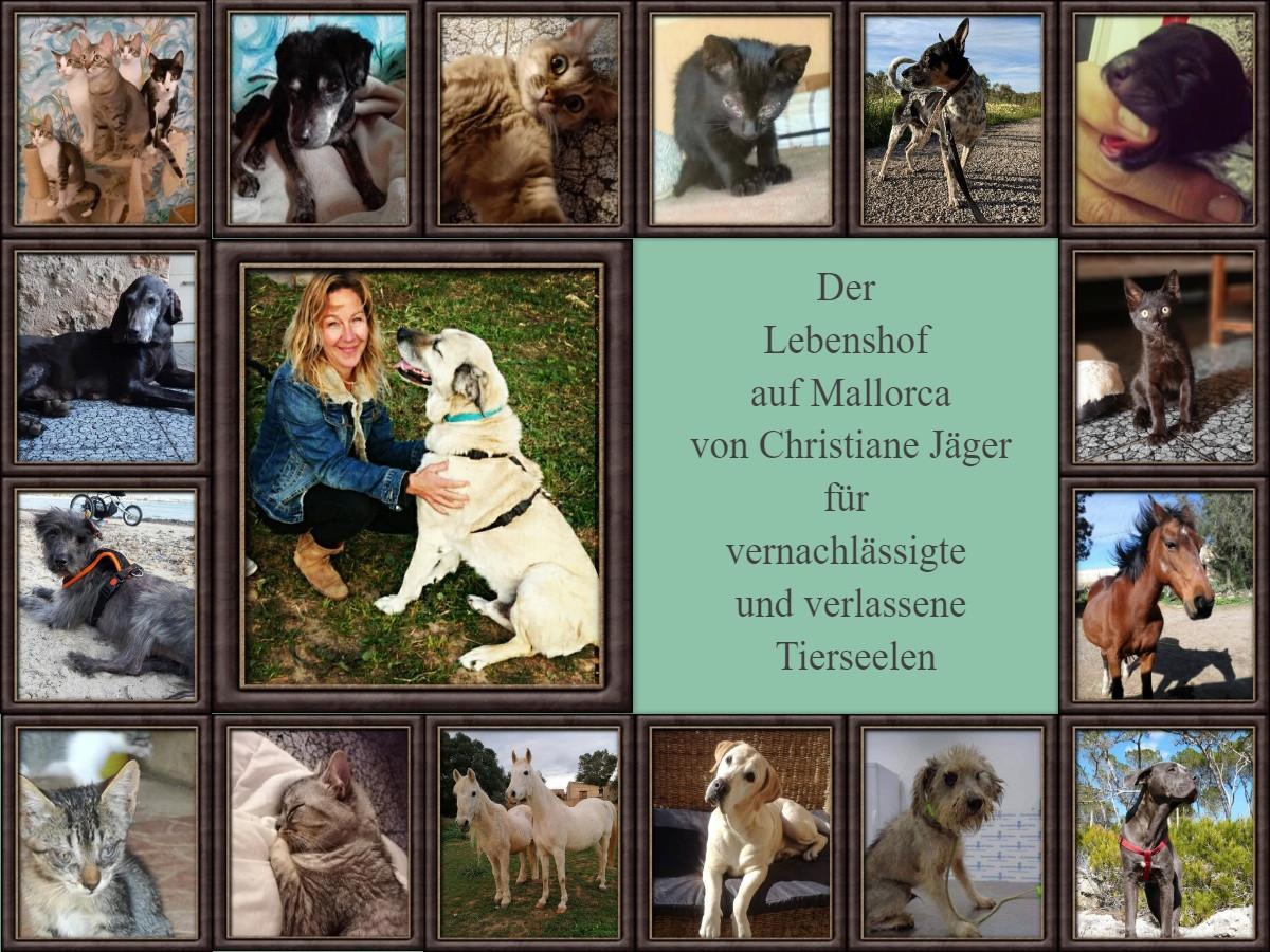 Christiane Jaeger Collage im Mai im Tierschutzkalender