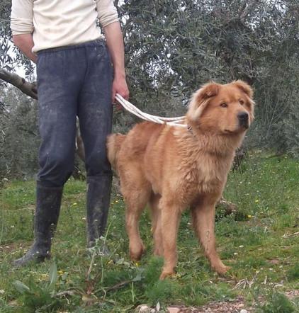 Teddy Andalusien 10.jpg
