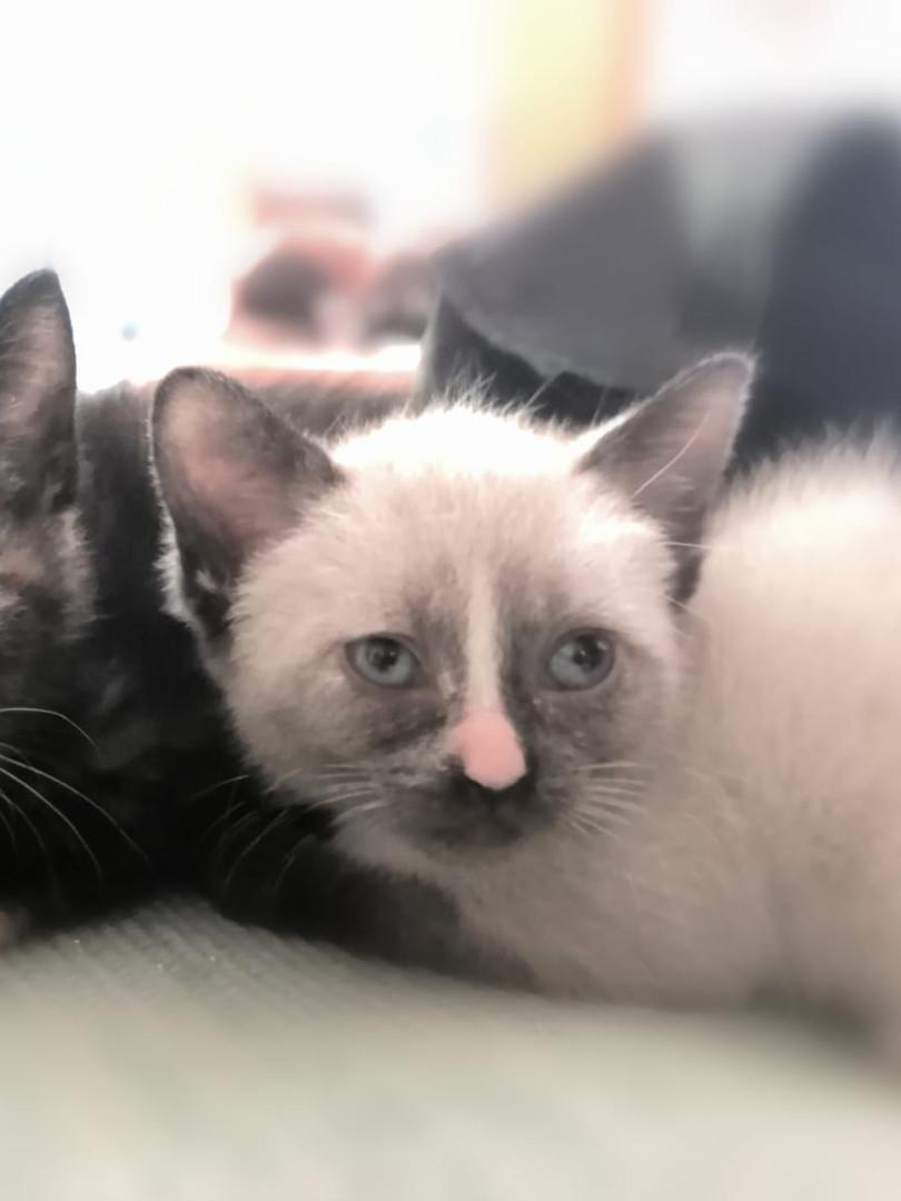 SOS Animal Mallorca Katzenhilfe.jpg