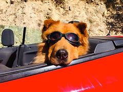 Teddy Caprio 1.jpg