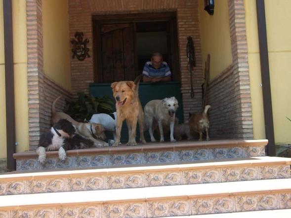 Teddy Andalusien 20.jpg