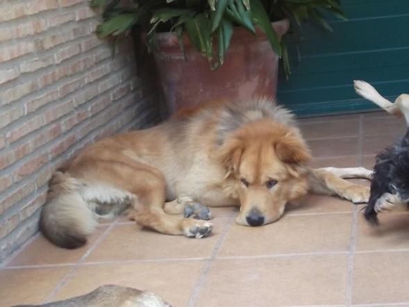 Teddy Andalusien 23.jpg