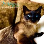 Mallorca Brands Tierschutzkalender_ Brow