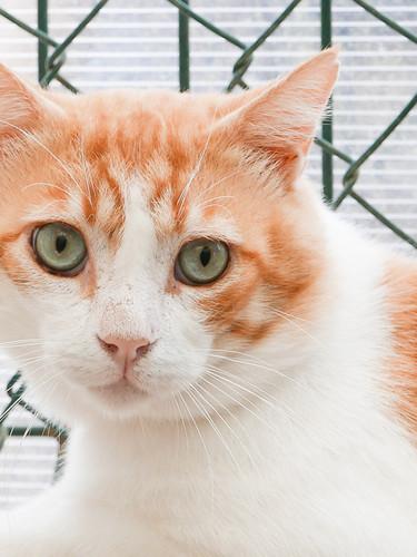 Tierheimkatze von SOS Animal Mallorca