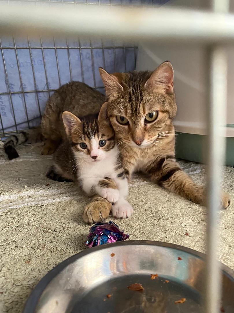 Mutter und Kind gerettet
