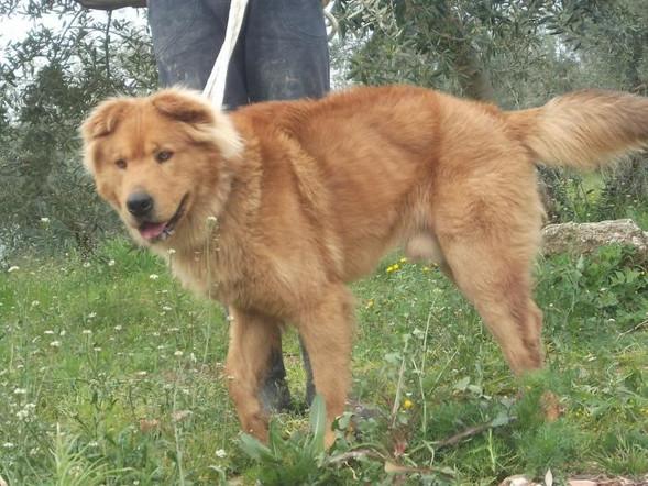Teddy Andalusien 11.jpg