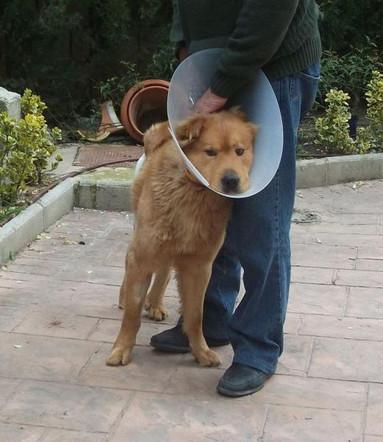 Teddy Andalusien 19.jpg