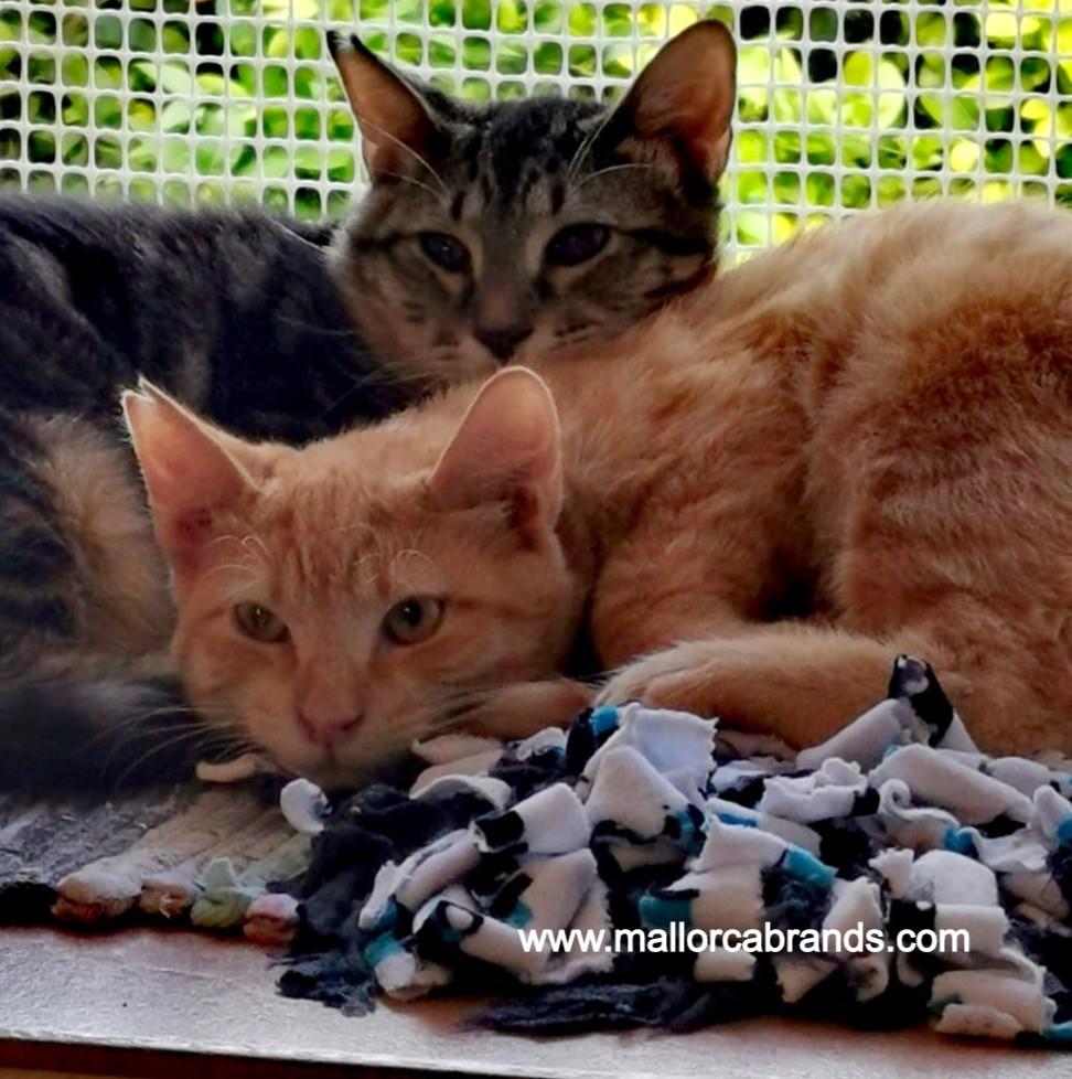 Mallorca Katze gerettet