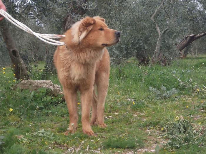 Teddy Andalusien 9.jpg
