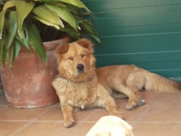 Teddy Andalusien 22.jpg