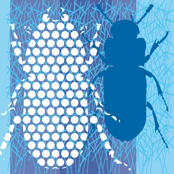 Two Beetles No1