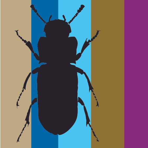 Black Beetle on Stripes