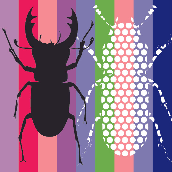 Two Beetles on Stripes